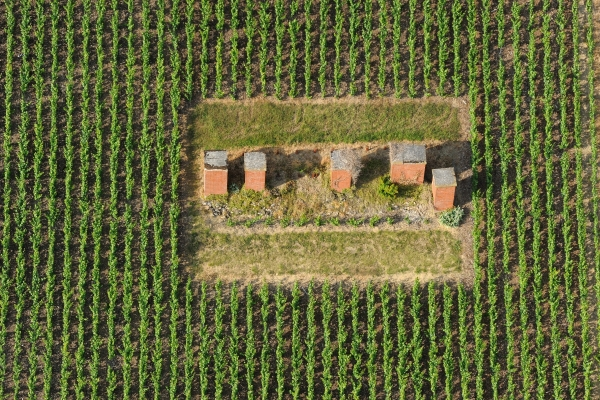 Ventilation shafts in vineyard – Historic hillsides – Aÿ